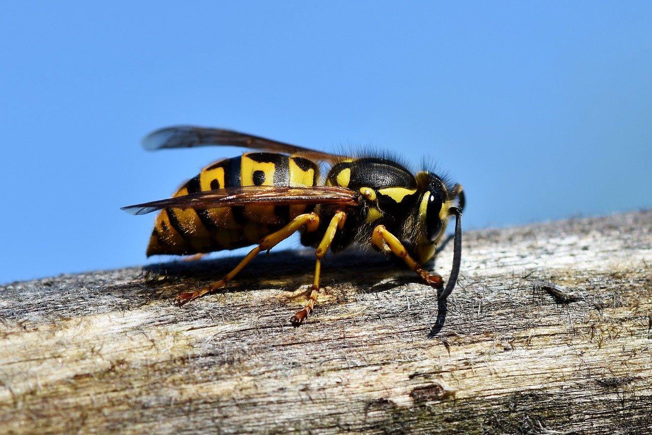Bienen und Wespen vertreiben