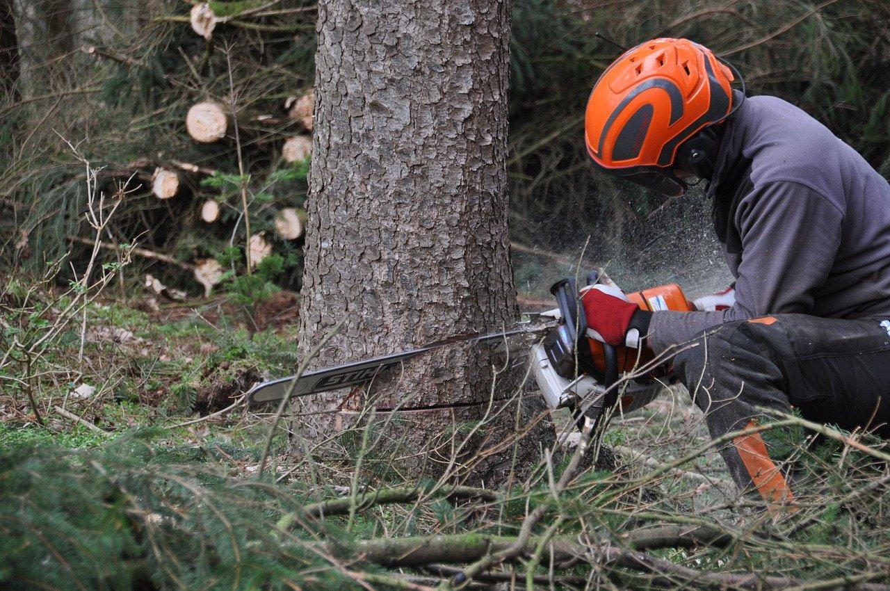 Wann darf man einen Baum fällen